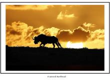 AFRIQUE DU SUD  OCTOBRE 2016
