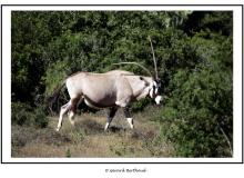 AFRIQUE DU SUD DU 05 NOVEMBRE AU 21 NOVEMBRE 2004