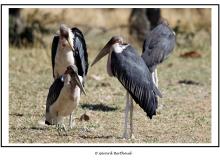 AFRIQUE DU SUD du 19 sept. 2012 au 06 0ct 2012  Capetown et Parc National de Kruger