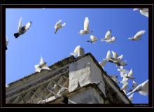 Les pigeonniers de Tinos
