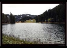 Lac de Morgins lieu de reproduction du crapaud commun