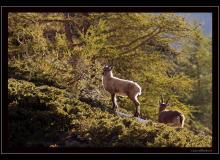 Etagne et cabri