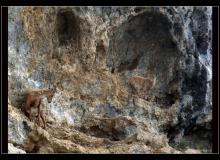 Etagne et cabri au col de Cou