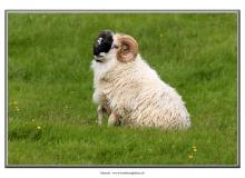 mouton2_5075-2