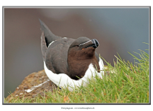petit-pingouin2_7281-2