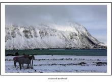norvege_86511