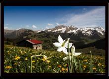 Le Mont-Chevreuil