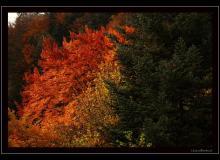 Ambiance d'automne
