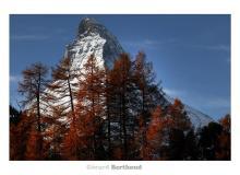 Couleur automnale dans la region de Zermatt