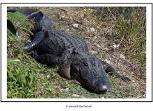 EVERGLADES - FLORIDE